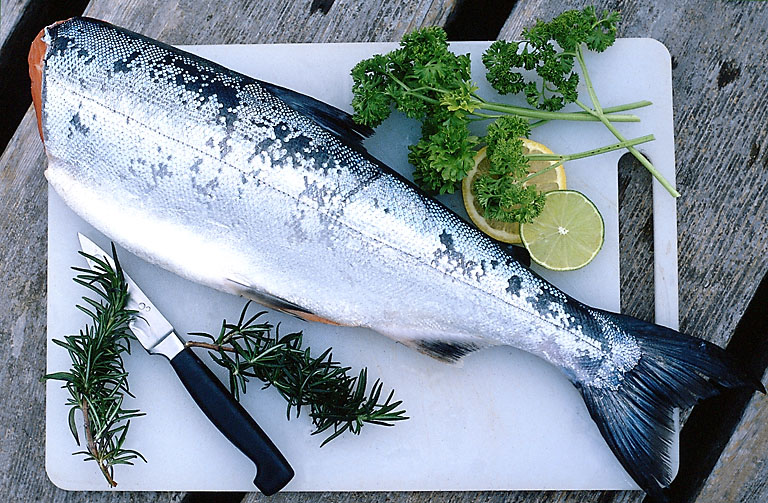 Best recipes for Best fishing in usa