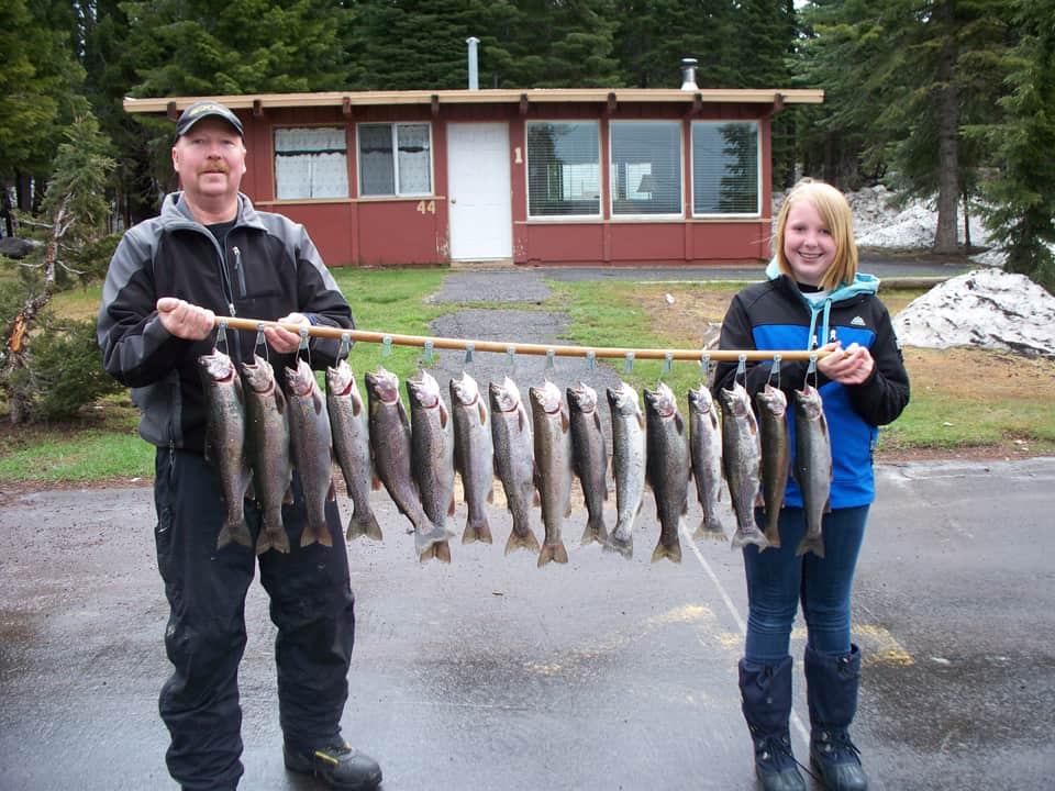 Long string of trout caught at oregon's diamond lake.