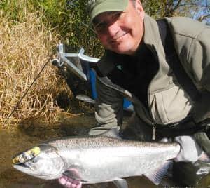 nice wilson river salmon