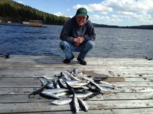 a bunch of kokanee caught at odell lake, oregon