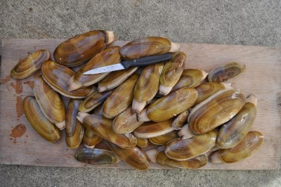best places for razor clamming in oregon