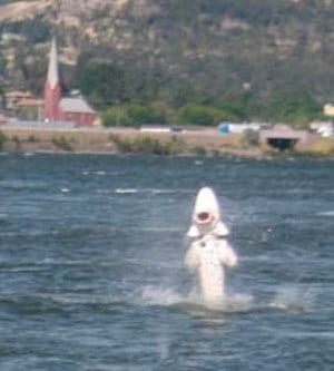 giant sturgeon leaping out of columbia river