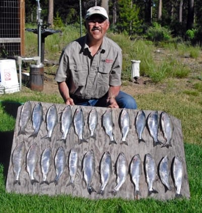 A bunch of kokanee caught in oregon