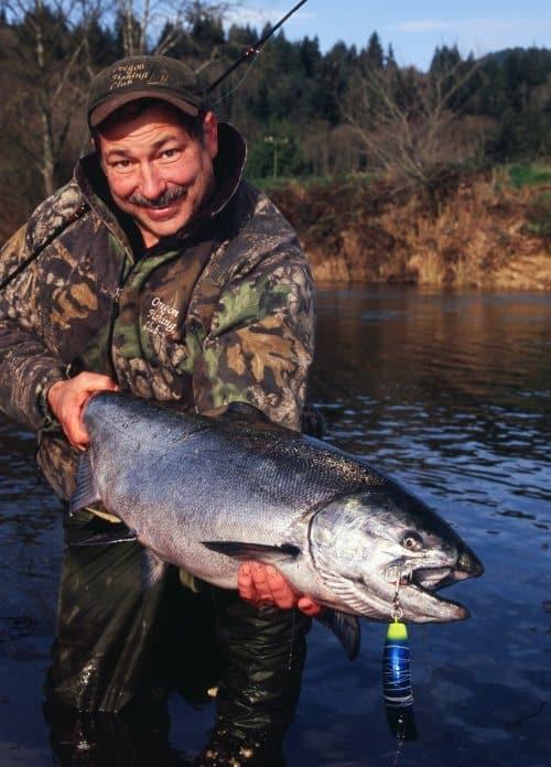 beautiful wilson river chinook salmon