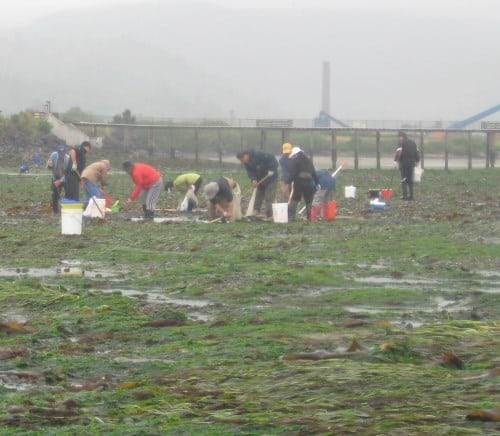 People are doing bay clamming.