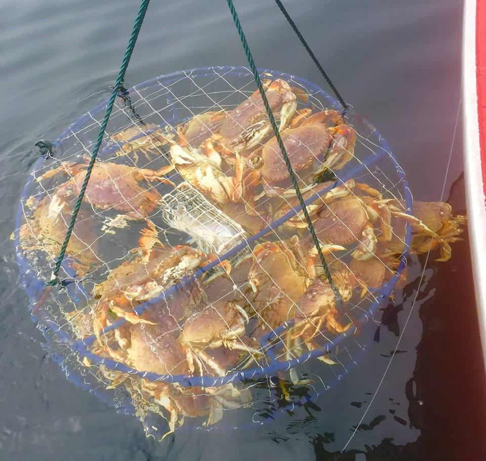 lifting a crab pot out of the water on the oregon coast