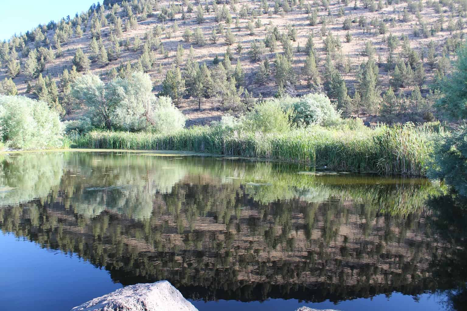 scenic photo of prineville youth pond in central oregon