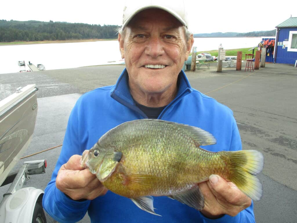 A giant bluegill caught at hagg lake near forest grove, oregon