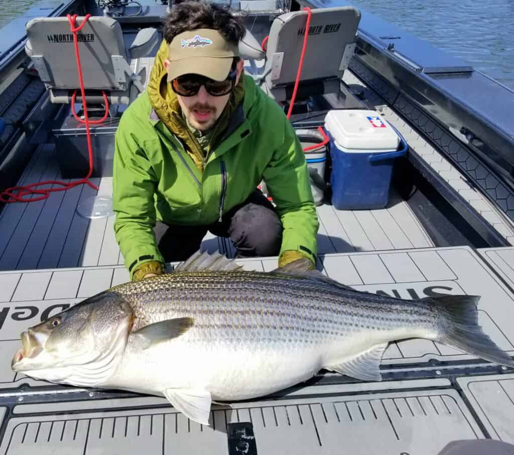 giant striped bass caught on the lower umpqua river