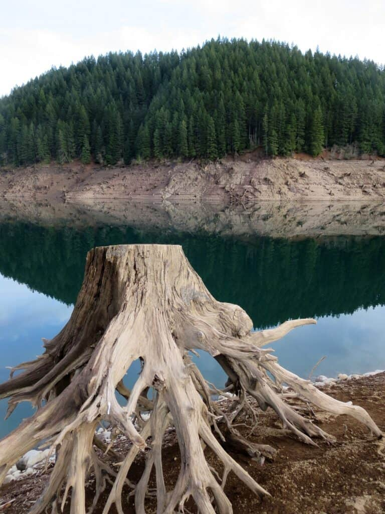 Stump out of water illustrates low water conditions at Detroit Lake, Oregon. Boat access can be difficult when the reservoir level is low.