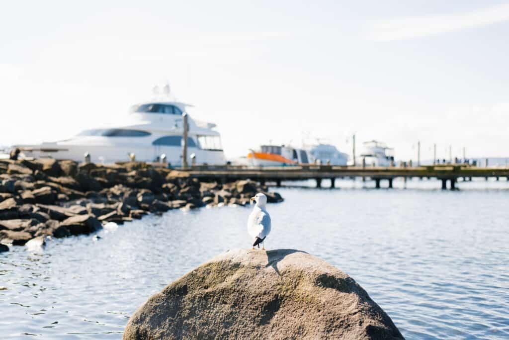 Seagull overlooking large boats docked at Lake Washington