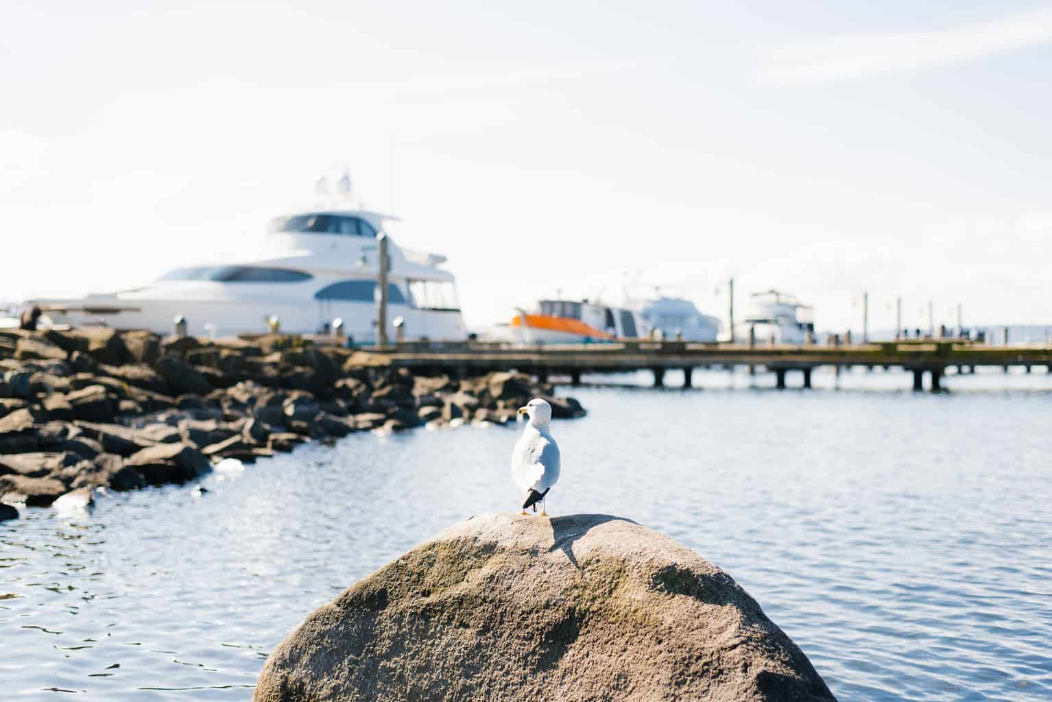 seagull on a rock in front of large boats on lake washington
