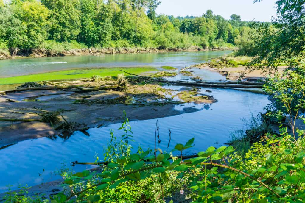 Nisqually River flowing peacefully through deciduous forest