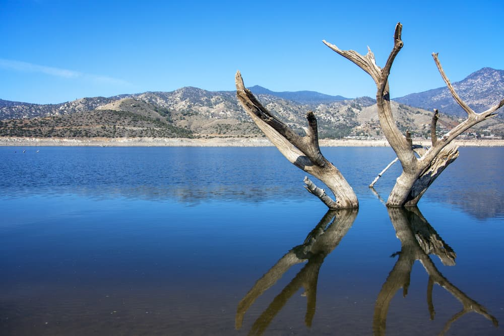Dead trees stick out of Lake Isabella, one of Southern California's best bass fishing lakes.