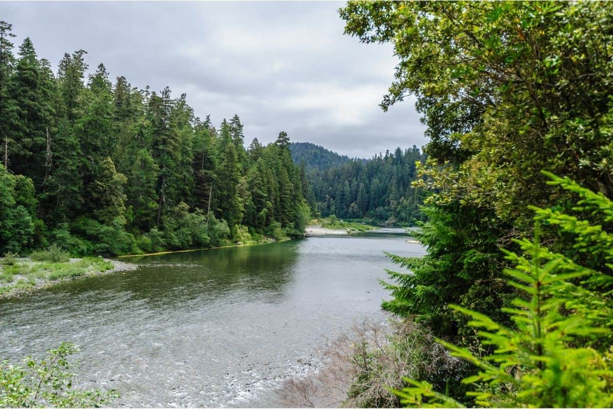 Scenic Smith River in California Redwoods.