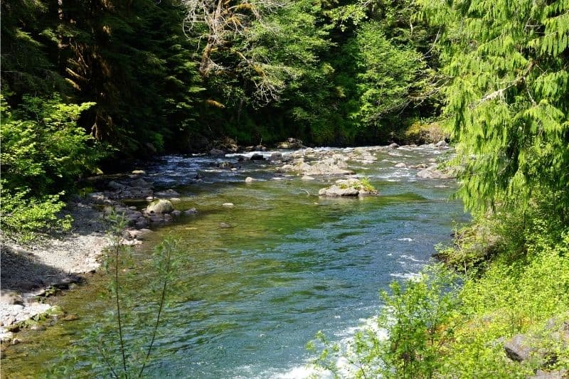 Scenic of the Sol Duc River flowing green through a forest.