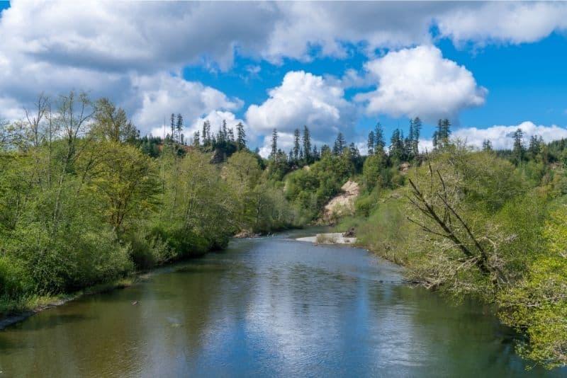 Wynoochee River flows through greening trees in springtime.